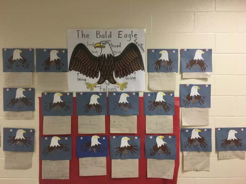 Bald Eagle 2017